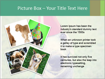 A cute dog in a local park with a birthday PowerPoint Templates - Slide 23