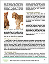 0000088368 Word Templates - Page 4