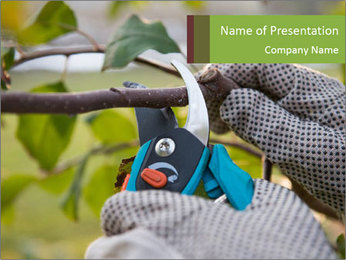 Pruning fruit trees by pruning shears PowerPoint Template - Slide 1