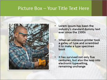 Pruning fruit trees by pruning shears PowerPoint Template - Slide 13