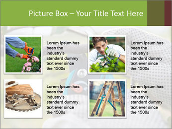 Pruning fruit trees by pruning shears PowerPoint Template - Slide 14