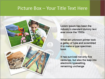 Pruning fruit trees by pruning shears PowerPoint Template - Slide 23