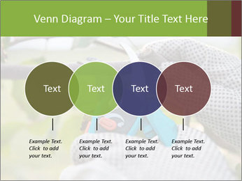 Pruning fruit trees by pruning shears PowerPoint Templates - Slide 32