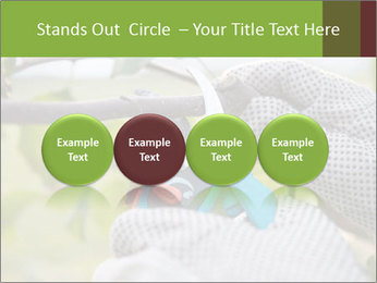 Pruning fruit trees by pruning shears PowerPoint Template - Slide 76