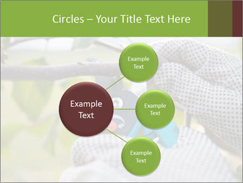 Pruning fruit trees by pruning shears PowerPoint Templates - Slide 79