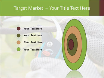Pruning fruit trees by pruning shears PowerPoint Template - Slide 84
