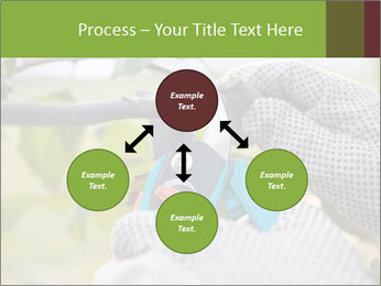 Pruning fruit trees by pruning shears PowerPoint Template - Slide 91