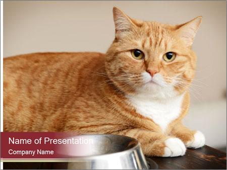 Beautiful ginger cat closeup PowerPoint Template