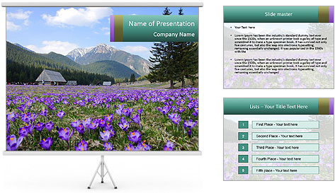 Crocuses in Chocholowska valley PowerPoint Template