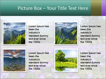 Crocuses in Chocholowska valley PowerPoint Template - Slide 14