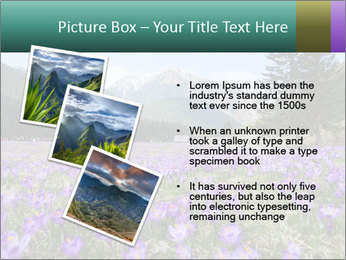 Crocuses in Chocholowska valley PowerPoint Template - Slide 17