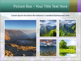 Crocuses in Chocholowska valley PowerPoint Template - Slide 19