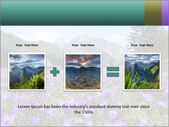 Crocuses in Chocholowska valley PowerPoint Template - Slide 22
