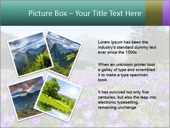Crocuses in Chocholowska valley PowerPoint Template - Slide 23