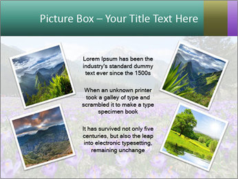 Crocuses in Chocholowska valley PowerPoint Template - Slide 24