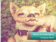 A cute chihuahua with a mustache finger in front of him done PowerPoint Templates