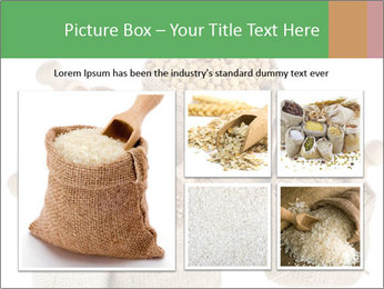 Corn kernel seed meal and grains in bags collection PowerPoint Template - Slide 19