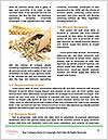 0000088428 Word Template - Page 4
