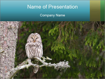 Ural Owl on tree PowerPoint Template - Slide 1