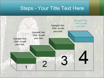 Ural Owl on tree PowerPoint Template - Slide 64