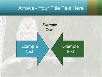 Ural Owl on tree PowerPoint Template - Slide 90