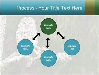 Ural Owl on tree PowerPoint Template - Slide 91