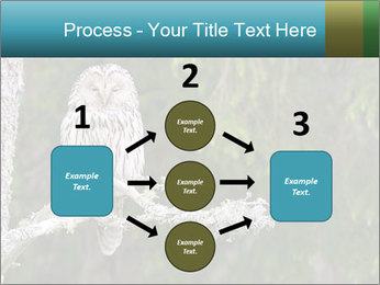 Ural Owl on tree PowerPoint Template - Slide 92