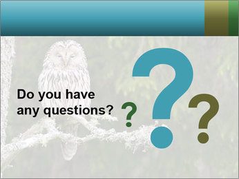 Ural Owl on tree PowerPoint Template - Slide 96
