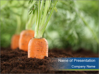 Healthy eating ripe carrots in vegetable PowerPoint Templates - Slide 1