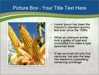 Healthy eating ripe carrots in vegetable PowerPoint Templates - Slide 13