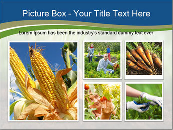 Healthy eating ripe carrots in vegetable PowerPoint Templates - Slide 19