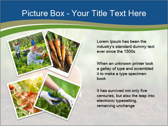 Healthy eating ripe carrots in vegetable PowerPoint Templates - Slide 23