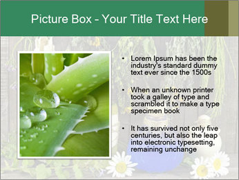 Still life with healing herbs PowerPoint Templates - Slide 13