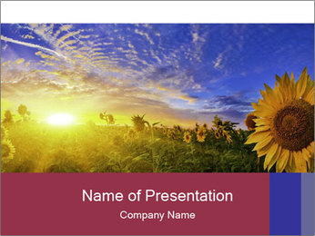Sunflower field PowerPoint Template