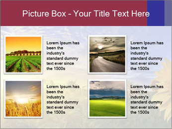 Sunflower field PowerPoint Templates - Slide 14