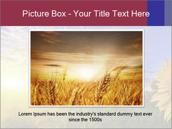 Sunflower field PowerPoint Templates - Slide 15