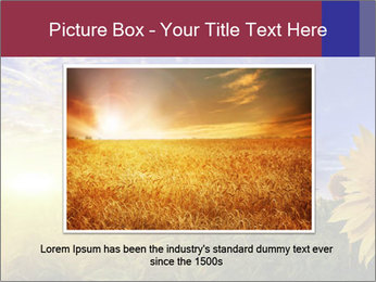 Sunflower field PowerPoint Templates - Slide 16