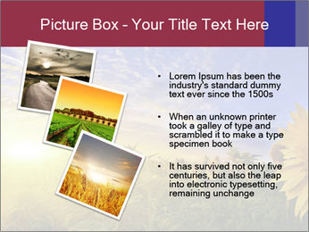 Sunflower field PowerPoint Templates - Slide 17