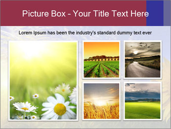 Sunflower field PowerPoint Templates - Slide 19