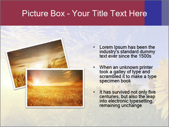 Sunflower field PowerPoint Templates - Slide 20