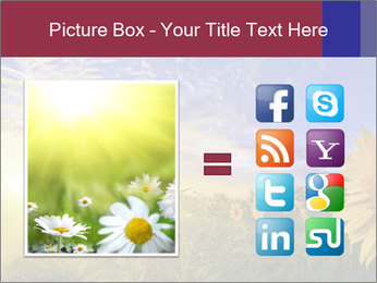 Sunflower field PowerPoint Templates - Slide 21