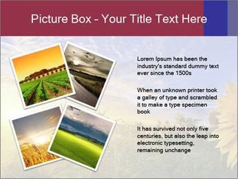 Sunflower field PowerPoint Templates - Slide 23