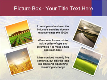 Sunflower field PowerPoint Templates - Slide 24