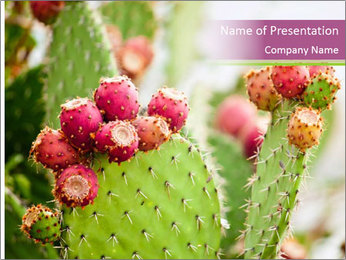 Cactus In Blossom PowerPoint Templates - Slide 1