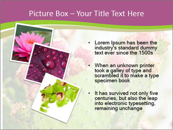 Cactus In Blossom PowerPoint Templates - Slide 17