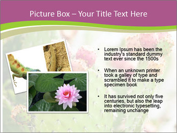 Cactus In Blossom PowerPoint Templates - Slide 20