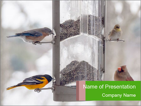 Sparrows During Winter PowerPoint Templates