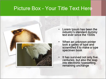 Sparrows During Winter PowerPoint Template - Slide 20