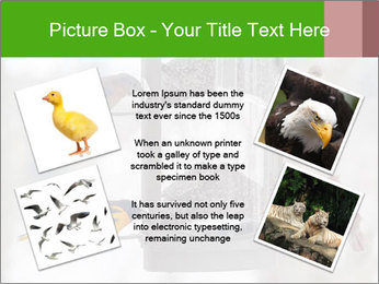 Sparrows During Winter PowerPoint Template - Slide 24