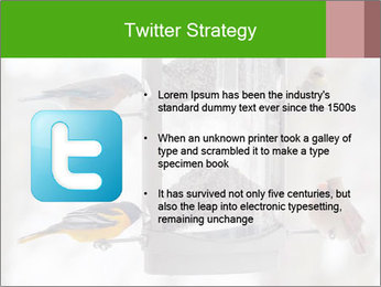 Sparrows During Winter PowerPoint Template - Slide 9